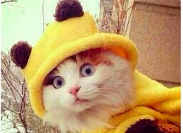 Бельгийцы отреагировали на угрозу терактов картинками с котятами