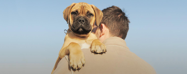 «У животных тоже бывают депрессии»: психолог о том, что чувствует ваш питомец