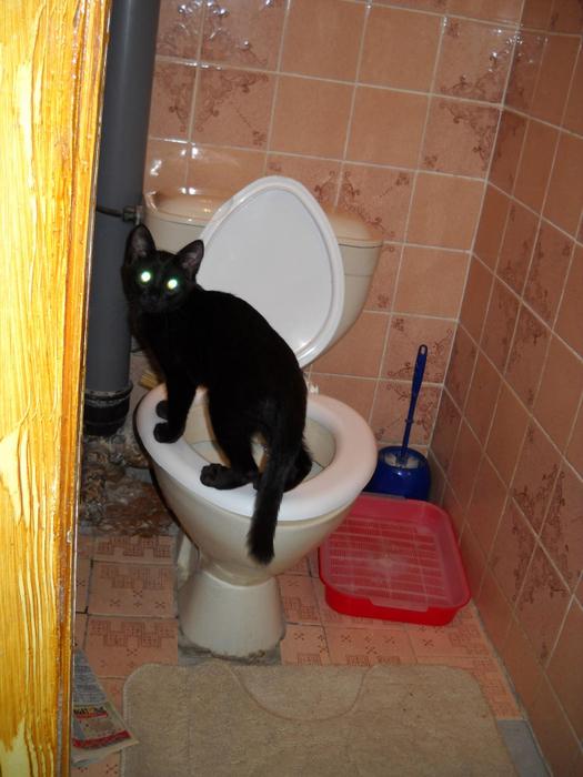 Как сделать чтобы том сходил в туалет