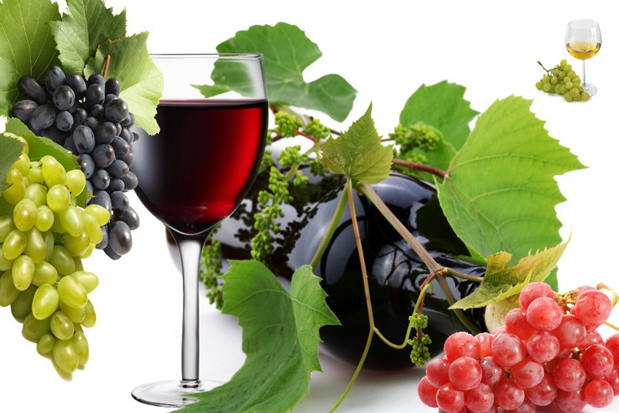 Изготовление вина домашних условиях винограда изабелла 47