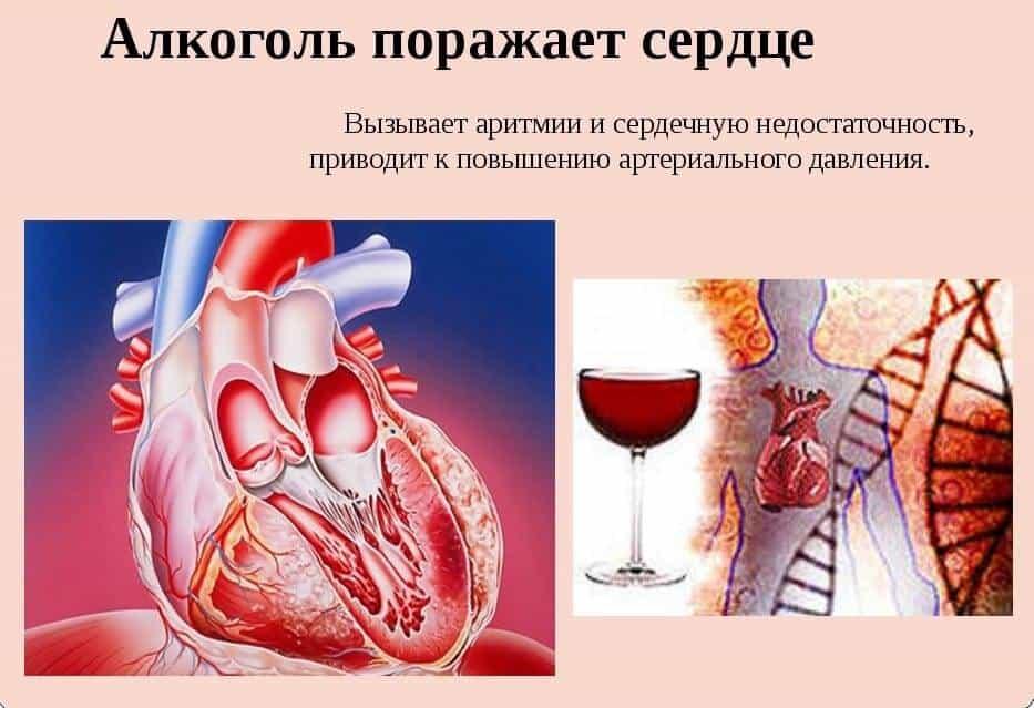 Как подлечить сердце после запоя