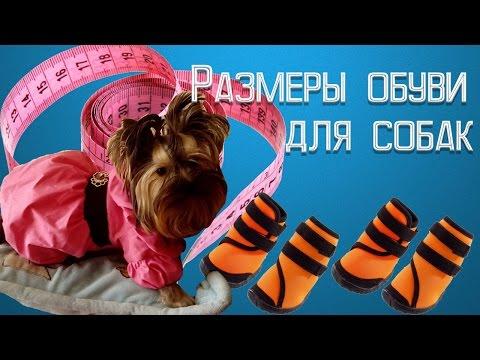 Размеры обуви для собак на алиэкспресс