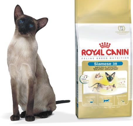 Корм royal canin для сиамских