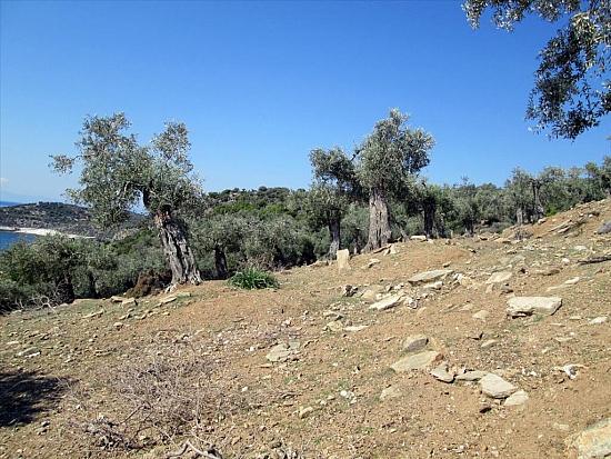 Земельный участок в остров Теологос