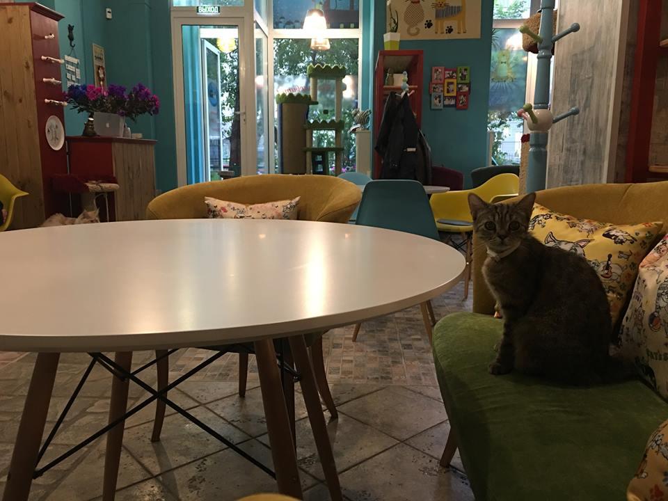 Ресторан Kotomania Cats & Relax Club - фотография 16