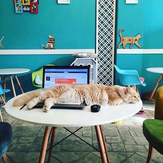 Ресторан Kotomania Cats & Relax Club - фотография 14