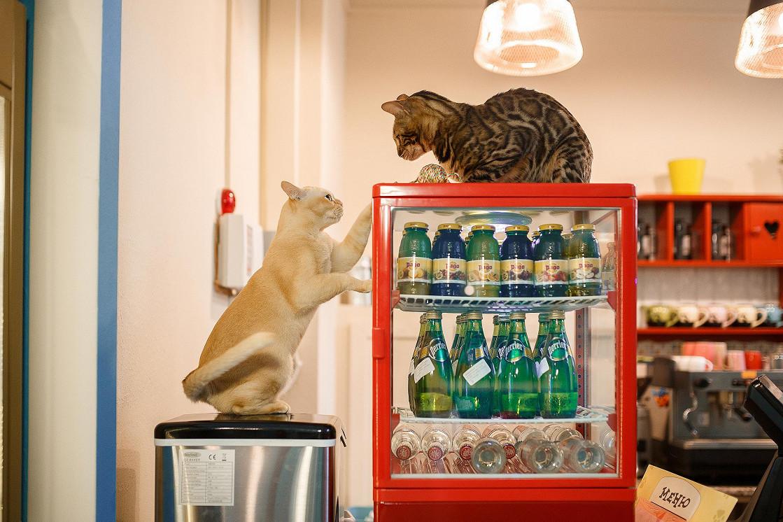 Ресторан Kotomania Cats & Relax Club - фотография 8