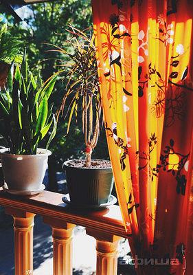 Ресторан Ботаник - фотография 10