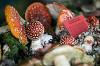 Фестиваль грибов и ягод-2016