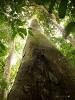 Однажды в лесу (Il était une forêt)