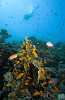 Краски подводного мира