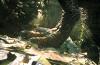 Парк юрского периода-3 (Jurassic Park III)