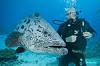 На глубине морской 3D (Under the Sea 3D)
