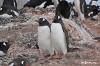 Проблема Антарктиды (The Antarctica Challenge)