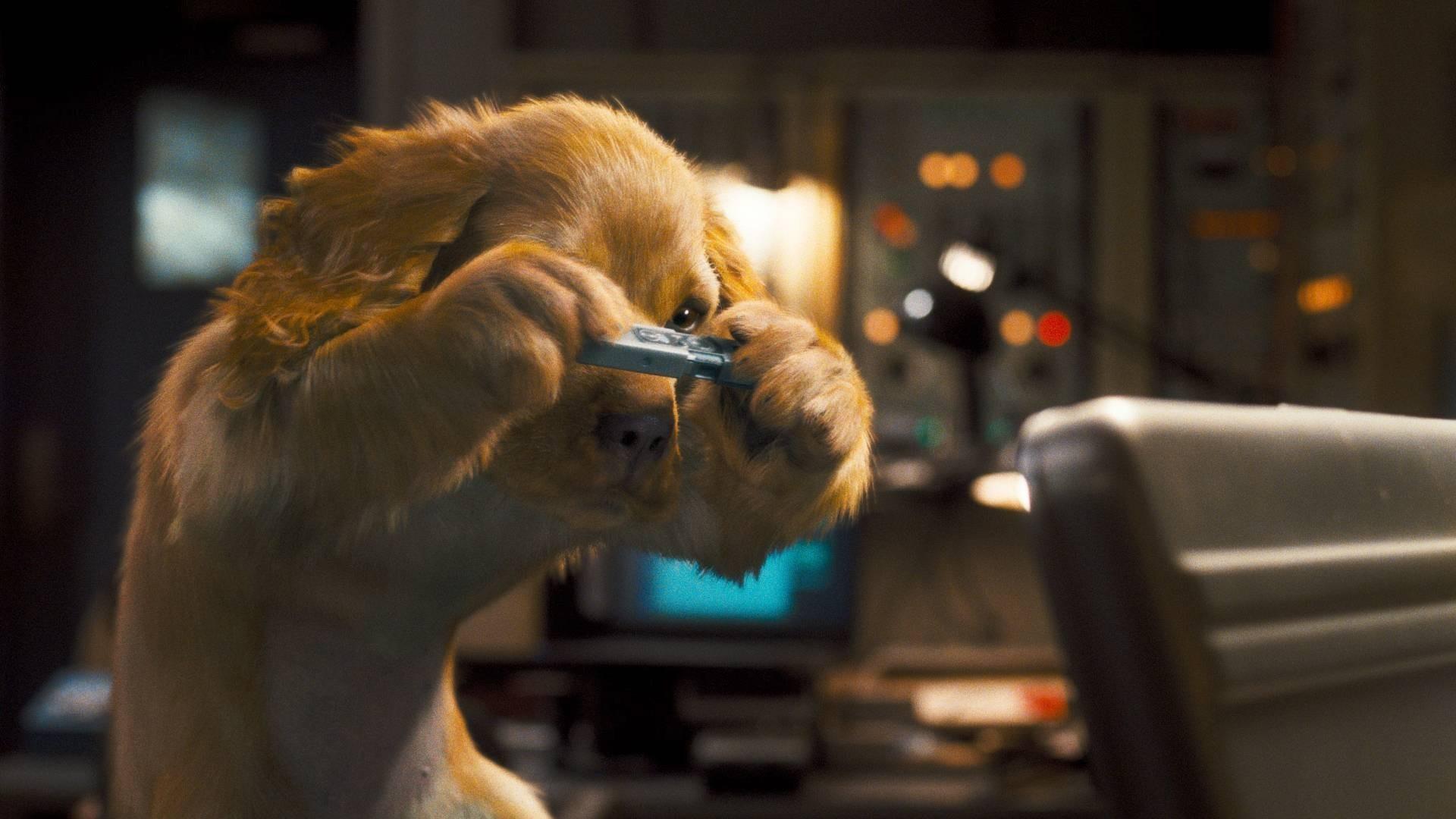 Кошки против собак: Месть Китти Галор смотреть фото