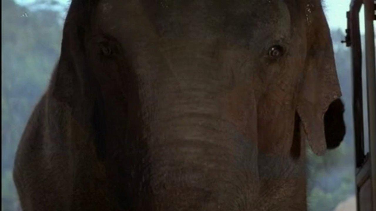 Операция «Слон» смотреть фото