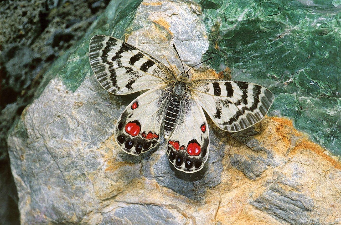 Эстетика и богатство мира насекомых смотреть фото