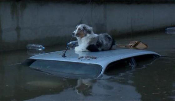 Париж 2011: Великое наводнение (Paris 2011: La grande inondation)