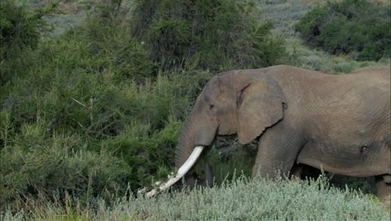 Сердце Африки (The Great Rift: Africa's Wild Heart)