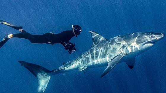Акулы 3D (Sharks 3D)
