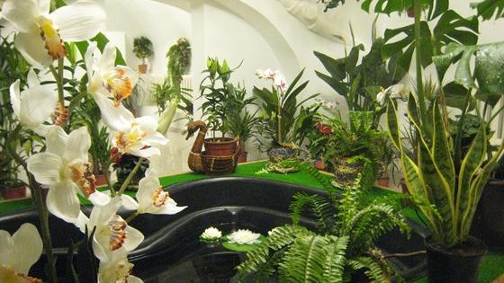 Музей бабочек «Тропический рай»