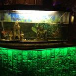 Ресторан Жемчужина - фотография 4