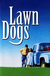 Постер Луговые собачки