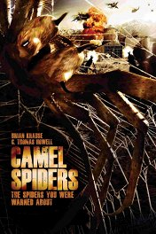 Верблюжьи пауки / Camel Spiders