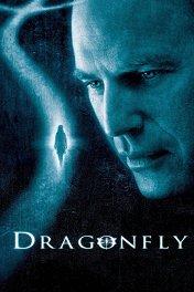 Стрекоза / Dragonfly