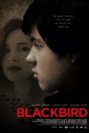 Черный дрозд / Blackbird
