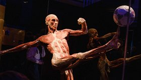 Body Worlds: цикл жизни