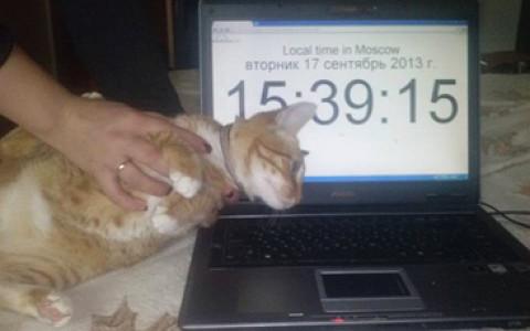 В Москве требуют выкуп за похищенного кота