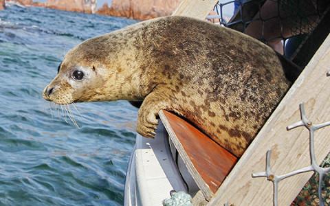 Как работает первый в России госпиталь для тюленей
