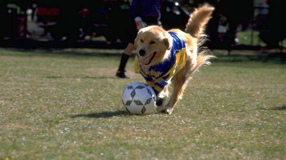 Король воздуха: Лига чемпионов (Air Bud 3: World Pup)