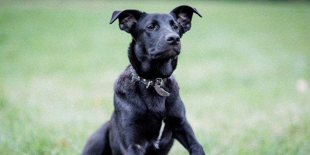 приютов для собак и кошек, где можно подружиться с животными и позаботиться о них