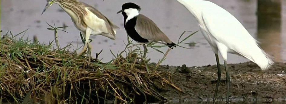 Кино: «Птицы»