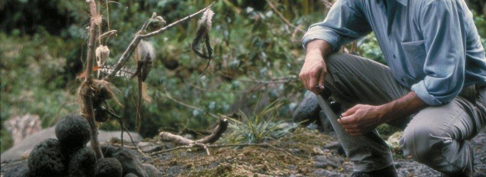 Кино: «Стрекоза»