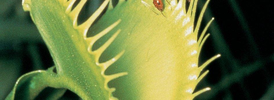 Кино: «Невидимая жизнь растений»