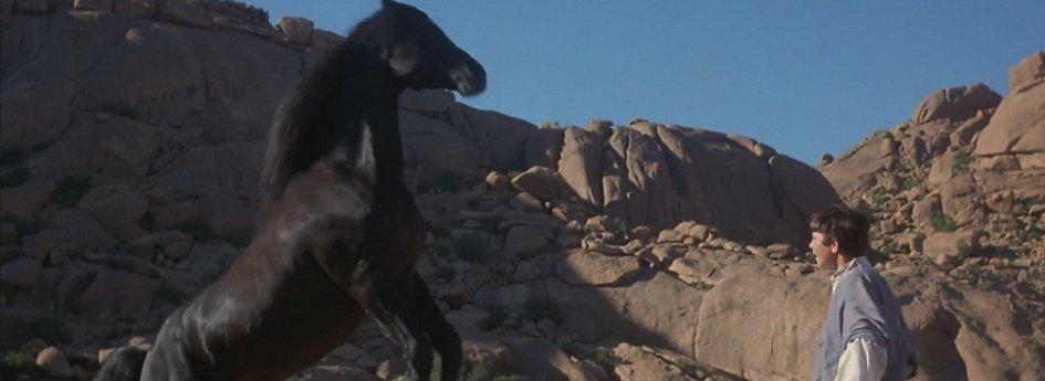 Кино: «Возвращение черного скакуна»