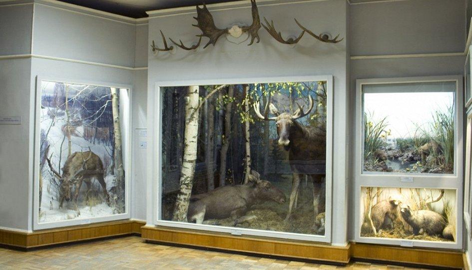 Выставки: Природа Ярославского края