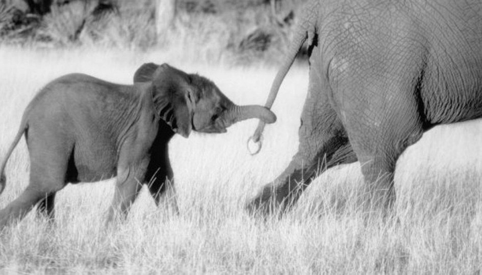 Кино: «Приключения слона»