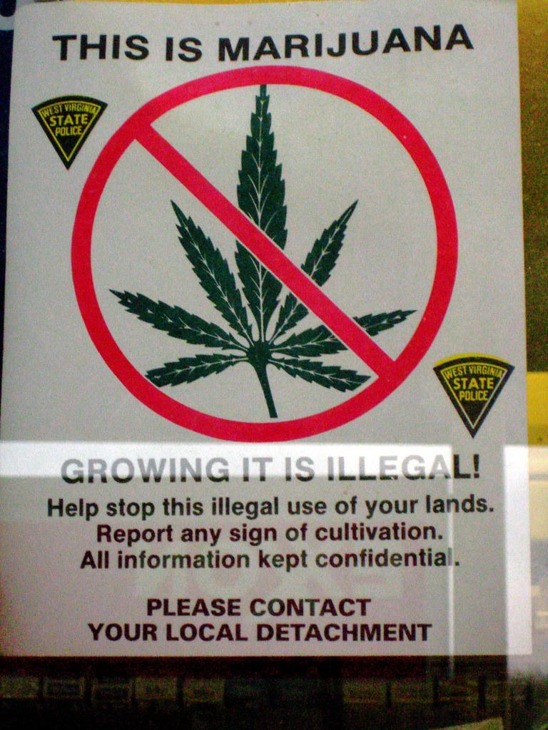 Marijuana legalization paper